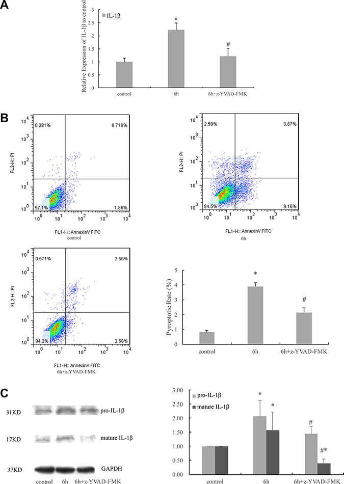 Cyclic stretch-induced expression of IL-1β and pyroptosis were caspase-1 dependent.