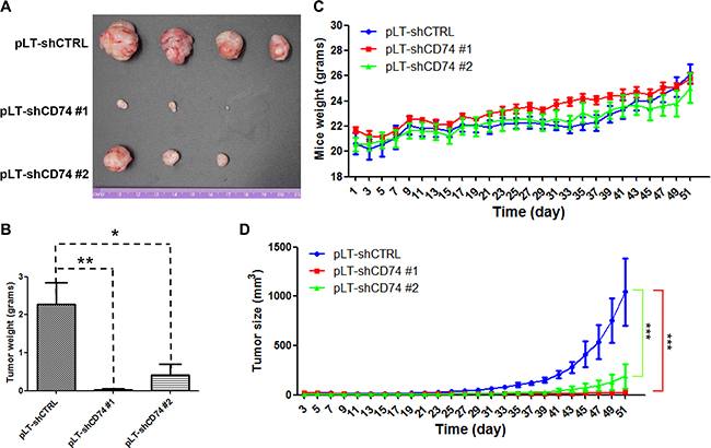 CD74 knockdown inhibits breast cancer tumor growth in vivo.