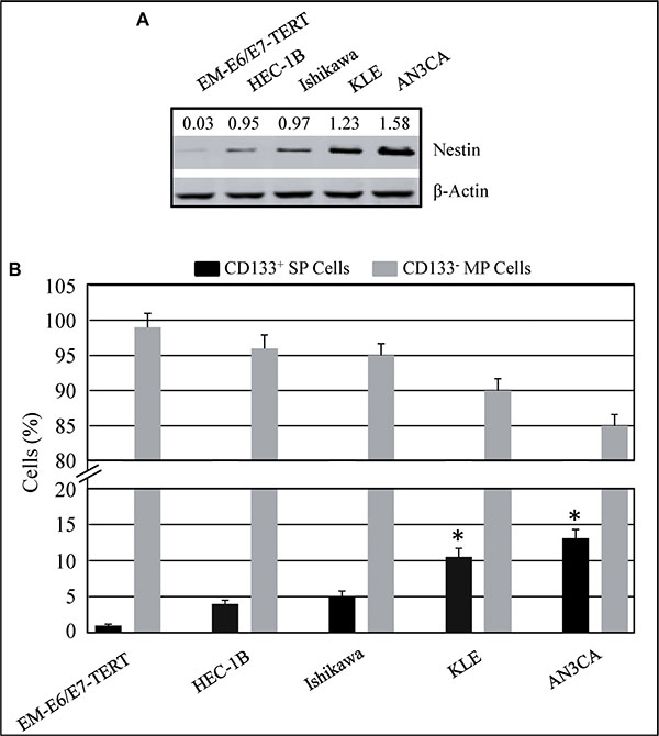 Expression of Nestin in immortalized endometrial epithelial EM-E6/E7-TERT cells and endometrial cancer lines.