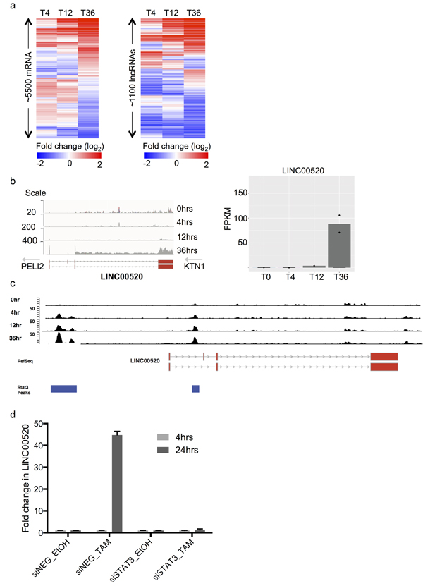 Identification and transcriptional regulation of LINC00520 in a model of Src-induced transformation of mammary epithelial cells.