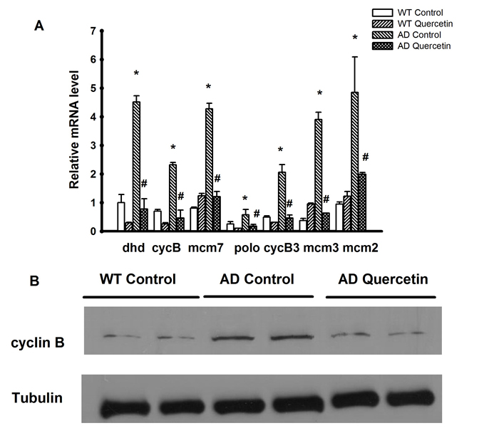 Validation of microarray results by qRT-PCR and Western blot.