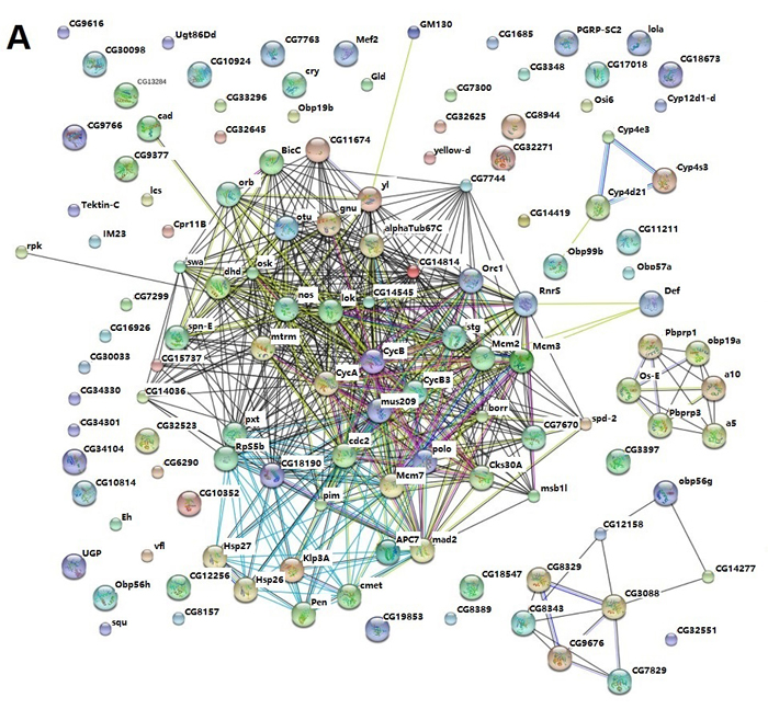 STRING analysis of the relationship between differentially expressed genes.