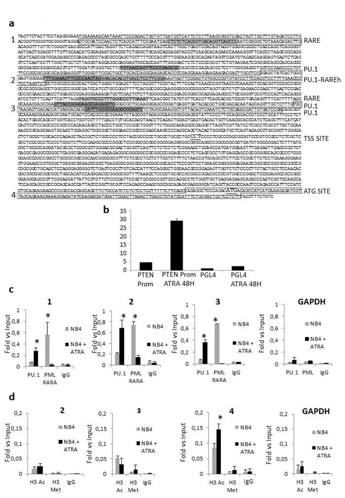 Regulation of PTEN expression.