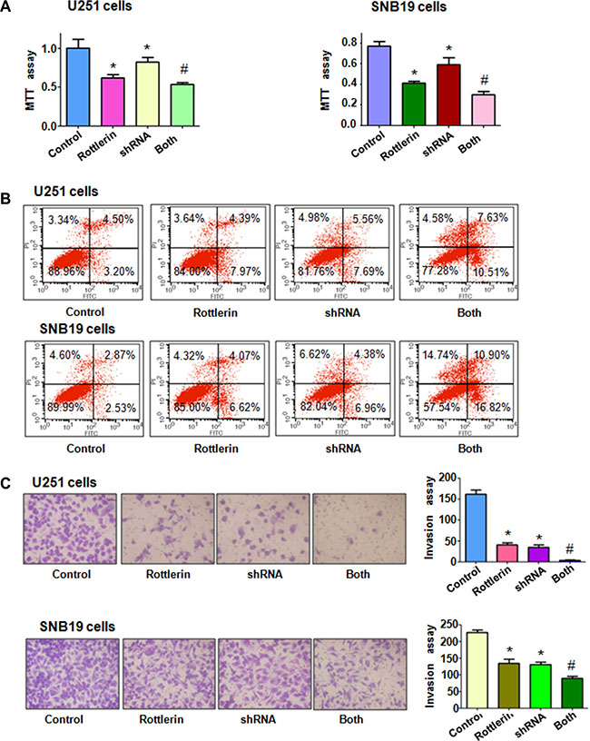 The effect of Cdc20 downregulation on cell growth, apoptosis and invasion.