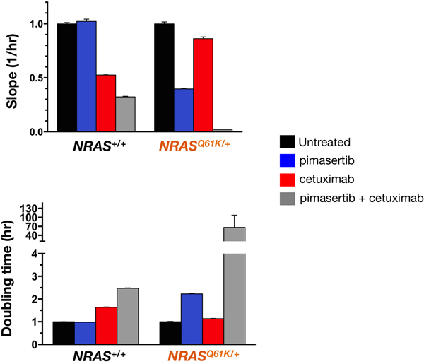 MEK1/2 inhibitor and cetuximab synergistically decrease the proliferation rate of