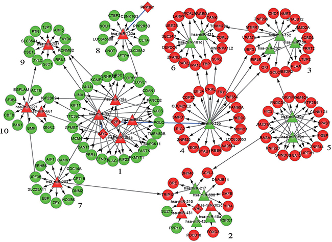Modularization of the gene-regulatory network linked to differentiation syndrome.