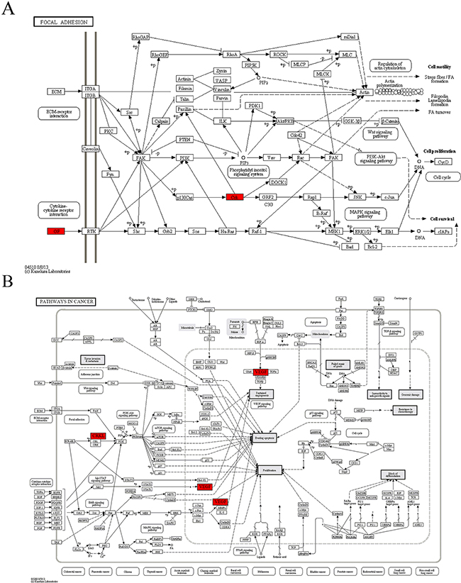 The maps of KEGG pathways that are enriched for genes of module 4.