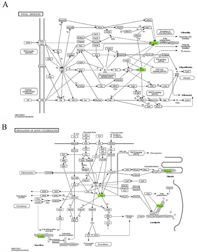 The maps of KEGG pathways that are enriched for genes of module 10.