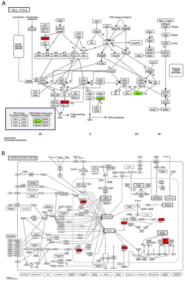 The maps of KEGG pathways that are enriched for genes in module 1.