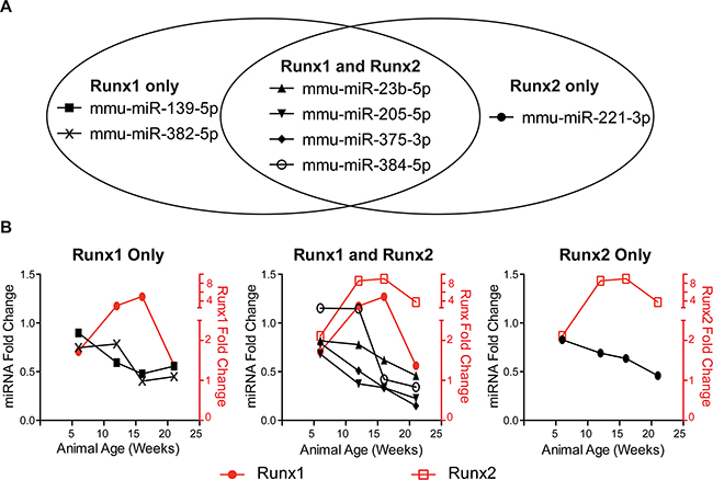 Runx-targeting miRNAs have reciprocal expression trends to Runx factors during PCa progression.