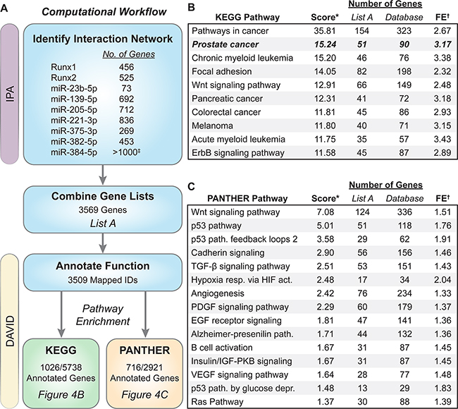 Biological pathway analysis of genes in the Runx/miRNA interaction network.