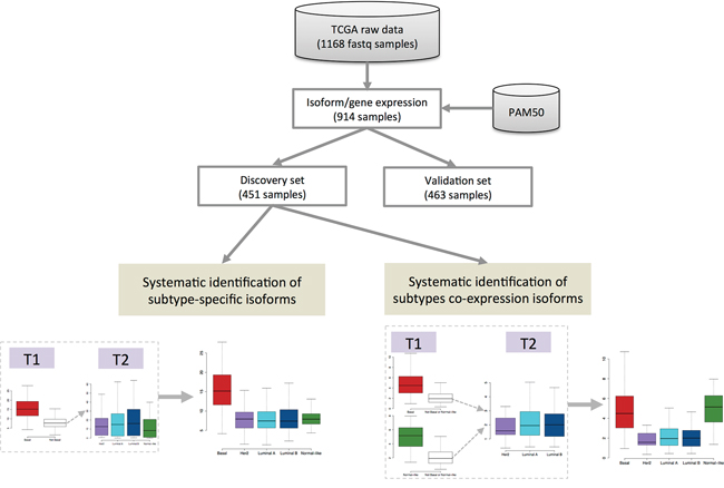 Pipeline of systematic identification of subtype-specific isoforms and subtype co-expression isoforms from breast cancer TCGA RNA-seq data.