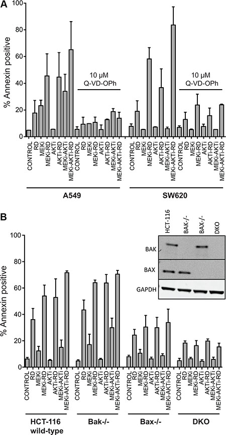 Apoptosis induced by treatment with romidepsin in combination with a MEK and an AKT inhibitor in KRAS mutant cells is caspase-dependent and requires Bak and Bax.