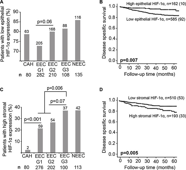 HIF-1α protein expression is a prognostic marker.