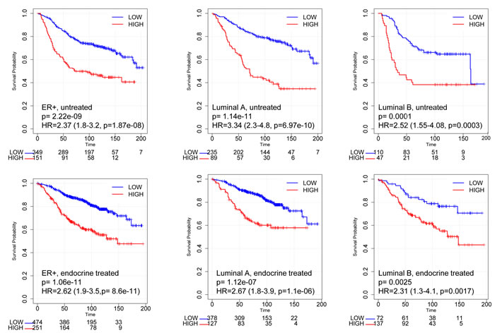 Kaplan-Meier curves according to RBsig in patients with ER+ breast cancer included in the meta-dataset.