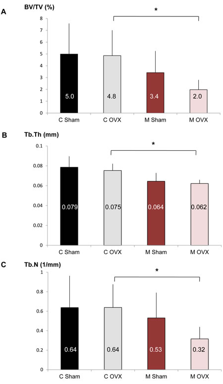 Effect of autophagy deficiency in OB on bone phenotype induced by aging and ovariectomy.
