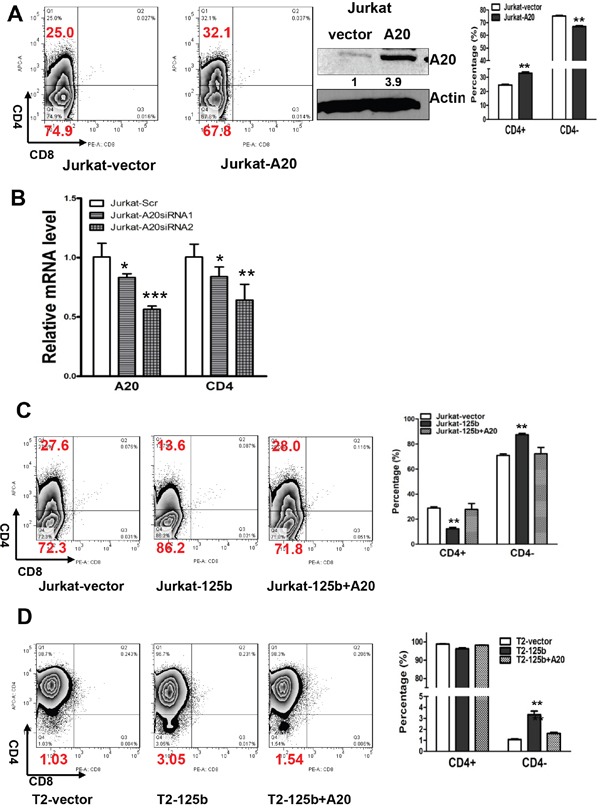 MiR-125 regulates CD4 differentiation marker in T-ALL cells through targeting A20.