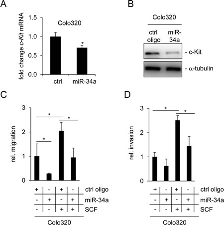 miR-34a inhibits basal and SCF-induced migration and invasion of Colo320 cells.