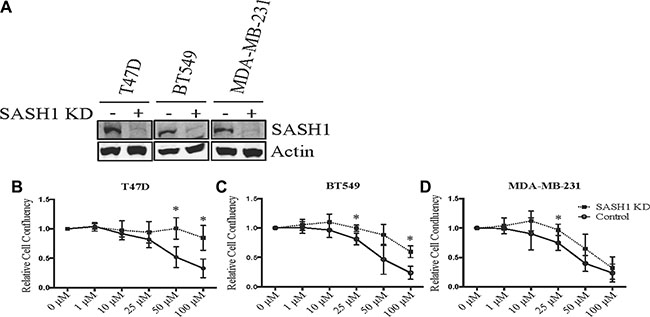 SASH1 depletion partially rescues chloropyramine-induced apoptosis in breast cancer cell lines.