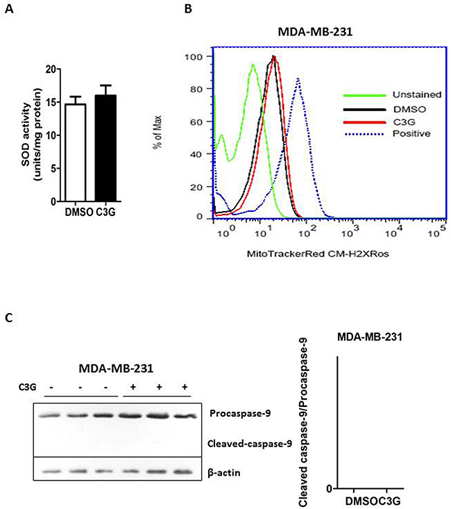 Cy-3-glu induces apoptosis of the MDA-MB-231 TNBC cells via the non-mitochondrial (extrinsic) pathway.