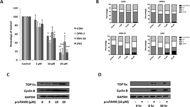 Inhibition of the APC/CFzr and APC/CCdc20 in MM cell lines with proTAME.