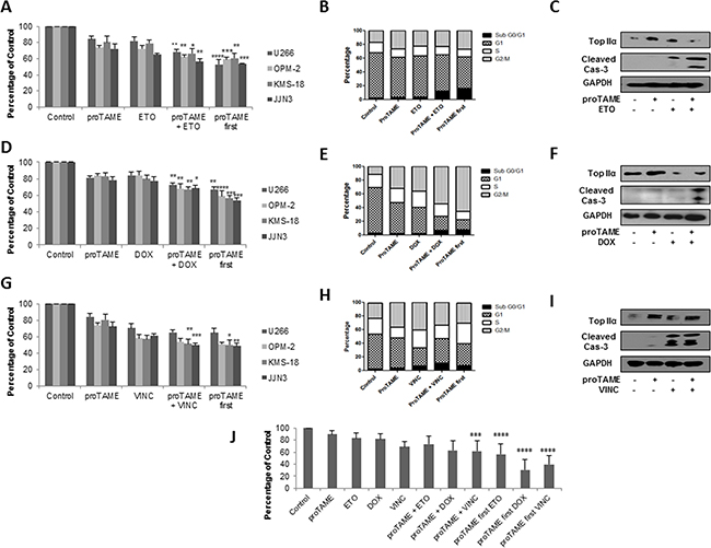 APC/C inhibition enhances the effect of conventional anti-mitotic agents in MM cell lines and primary cells.