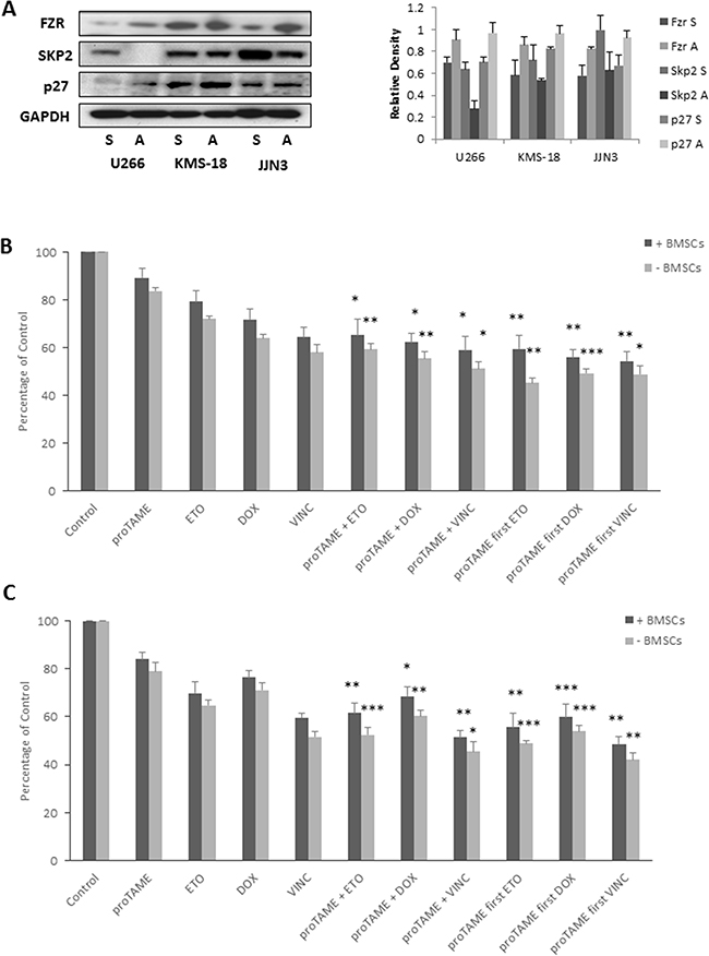 BMSC adhesion results in increased Fzr expression.