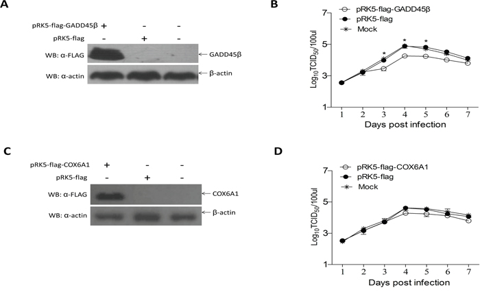 Effects of GADD45β and COX6A1 overexpression on ALV-J replication.