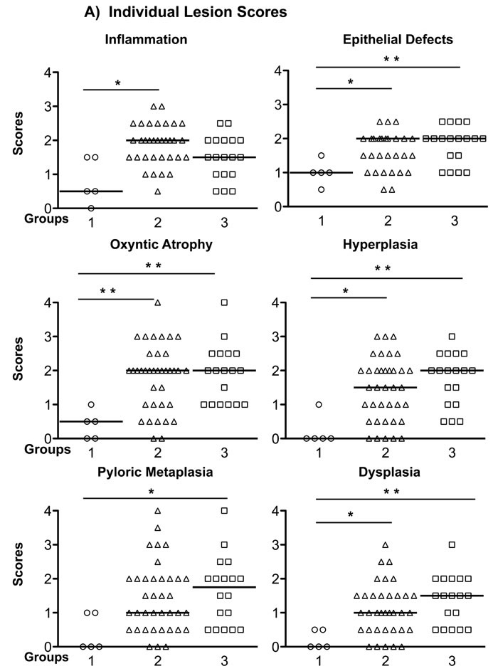 Gastric Histology Scores in