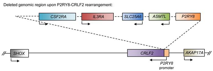 Schematic of the P2RY8-CRLF2 rearrangement.
