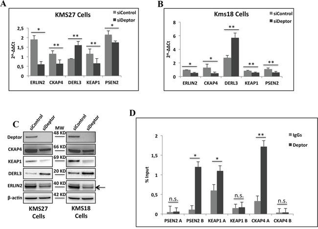 Deptor modulates transcription of genes involved in ER homeostasis.