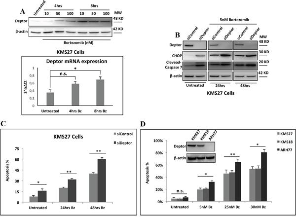 Deptor sensitizes MM cells to Bz treatment.