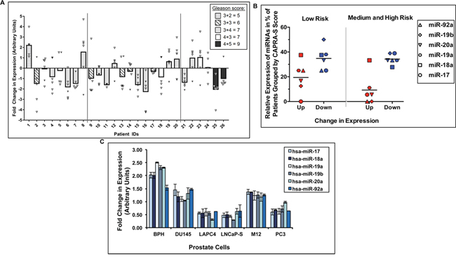 Expression profiles of the miR-17-92a cluster miRNAs in clinical samples and cell lines.