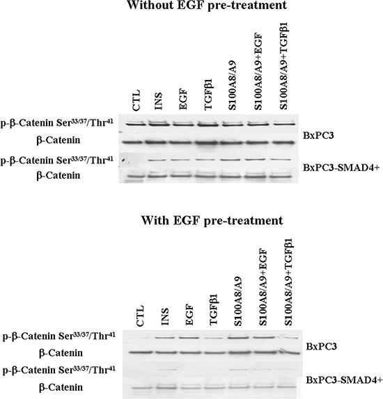 Wnt/β-catenin pathway.