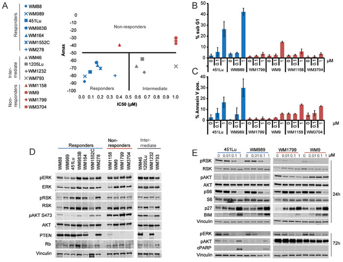 Differential sensitivity of BRAF-V600E melanomas to ERK inhibition.
