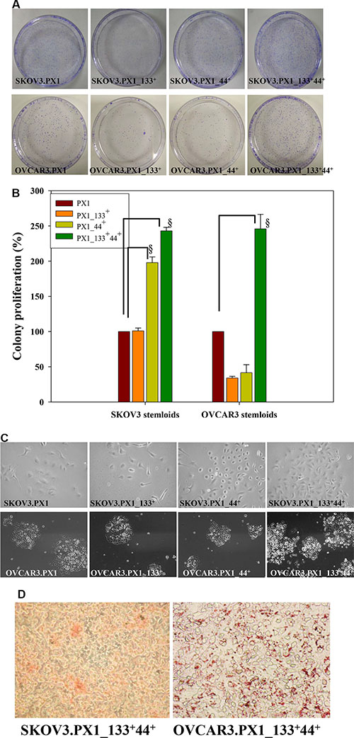 Stemness characteristics of SKOV3.PX1_133+44+ and OVCAR3.PX1_133+44+ cells.
