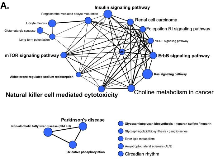 KEGG pathways identified in miRNA functional enrichment analyses.
