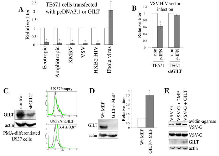 GILT inhibits viral entry by digesting S-S bonds of viral Env protein.