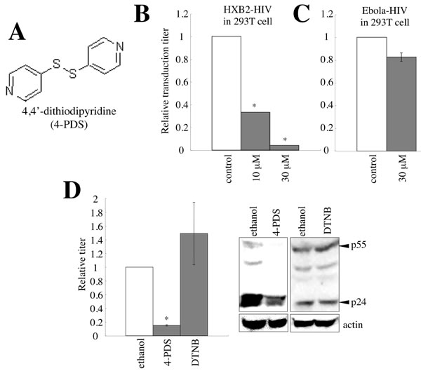 4,4'-dithiodipyridine (4-PDS) restricts the entry and virion production of HIV-1 vector.