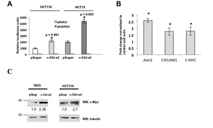 c-Cbl suppresses Wnt activity.