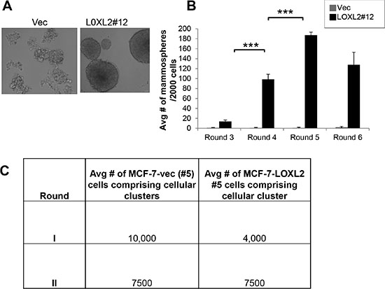 MCF-7-LOXL2 cells with EMT characteristics display high self-renewal capacity.
