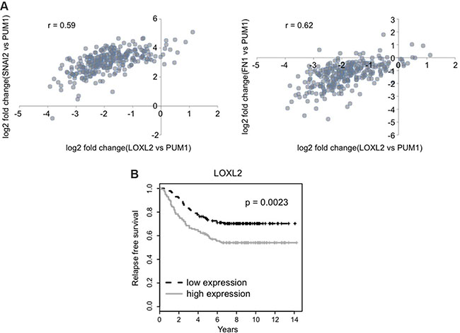 LOXL2 expression correlates with EMT/CSC markers and is associated with decreased relapse free survival.