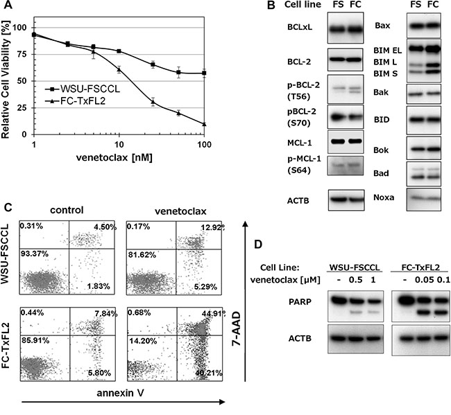 The effect of venetoclax on t(14;18) positive cell lines.