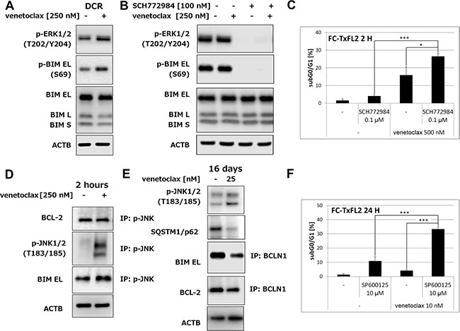 Activation of ERK1/2 and JNK1/2 in FC-TxFL2 cells treated with venetoclax.