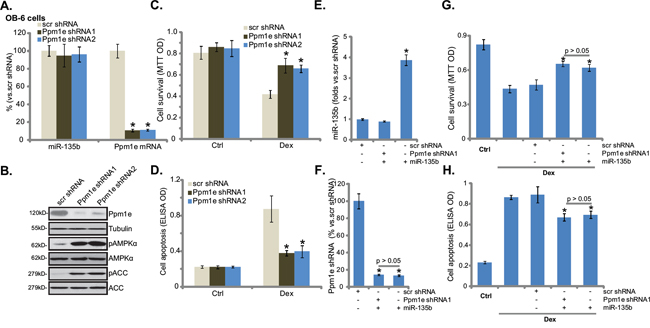 shRNA knockdown of Ppm1e activates AMPK and protects osteoblastic cells from Dex.