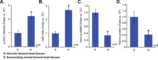 Upregulation of miR-135b in patients' osteonecrosis tissues.