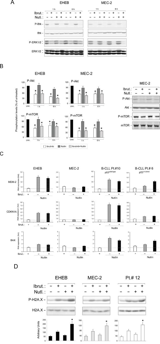 Intracellular pathway mediating the anti-leukemic activity of Ibrutinib/Nutlin-3 combination.