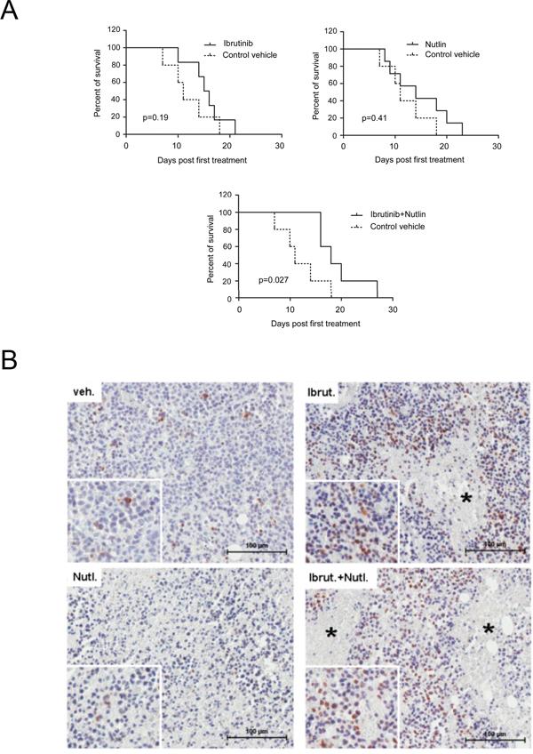 Anti-leukemic activity of Ibrutinib/Nutlin-3 combination assessed in vivo in a xenograft murine model.