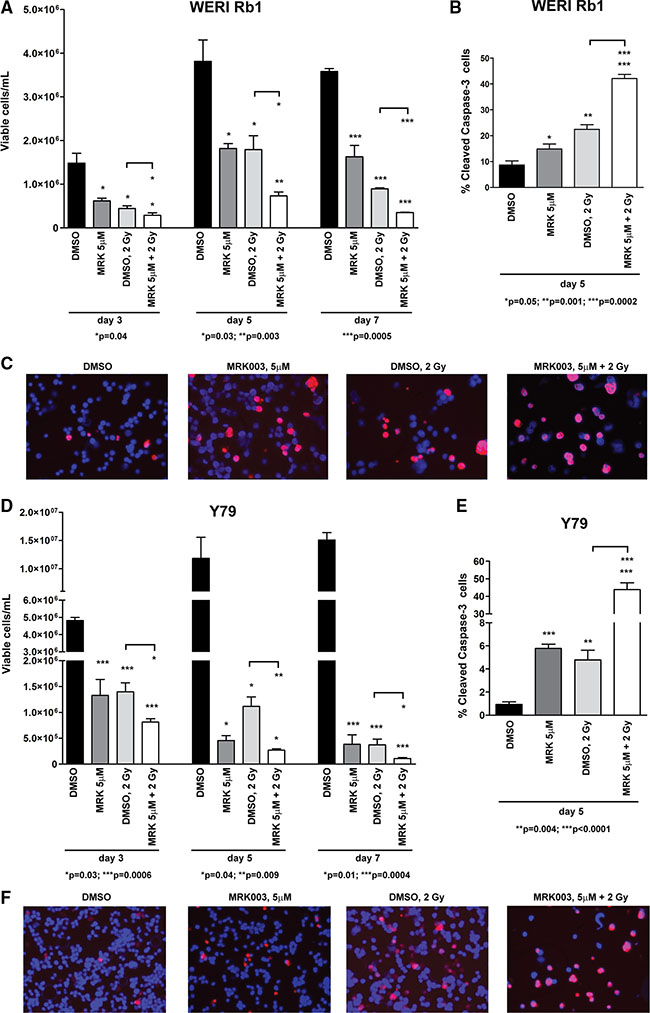Notch blockade enhances the γ-radiation-dependent inhibition of cell survival in retinoblastoma cells.