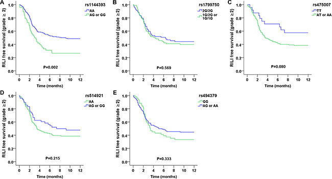 Kaplan–Meier estimates free survival of grade ≥ 2 RILI as a function of time from the start of radiation therapy by genotypes.